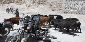 dane_Himalaya_Bild139